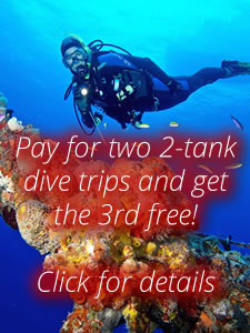 Diving specials in the florida keys